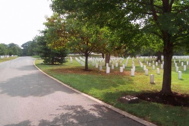 92d Infantry Division marker and memorial tree, lower right (ANC Section 23) image. Click for full size.