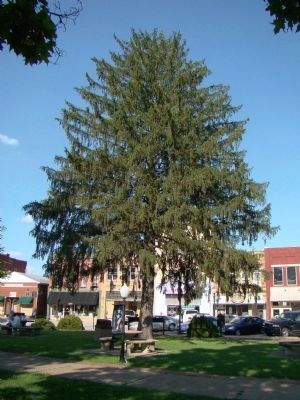 George Washington Bi-Centennial Memorial Tree image. Click for full size.