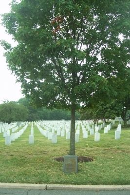 The Tuskegee Airmen marker and memorial tree image. Click for full size.