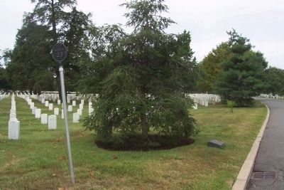555th Parachute Infantry Battalion marker and memorial tree image. Click for full size.