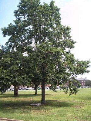 Memorial Tree image. Click for full size.