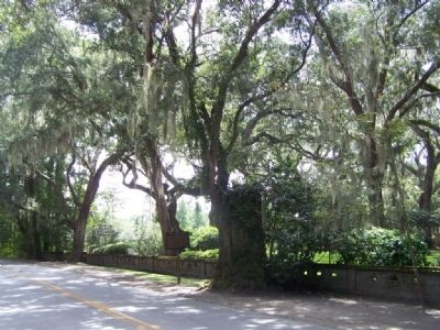 The Wesley Oak Marker, looking South along Frederica Rd image. Click for full size.
