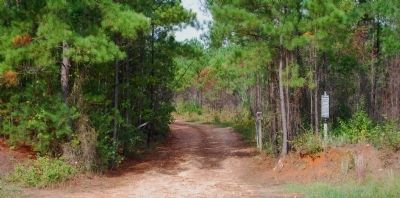 Dirt Road Leading to the Old Simkins Cemetery image. Click for full size.