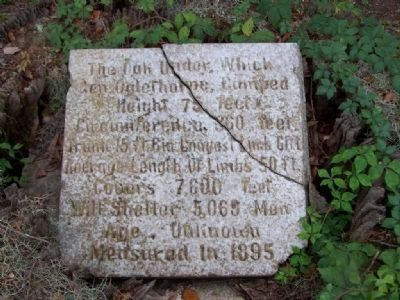 The Oglethorpe Oak Marker image. Click for full size.