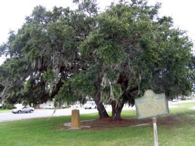 Lanier's Oak Marker under tree, Historical Marker at right image. Click for full size.