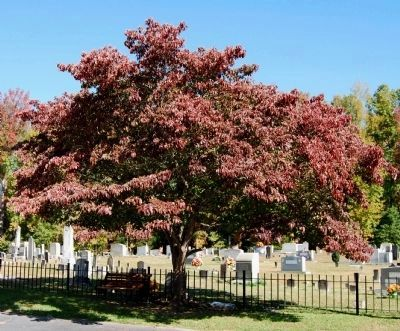 Bethlehem Lutheran Church Cemetery - Memorial Tree to Rev. George Schwartz image. Click for full size.