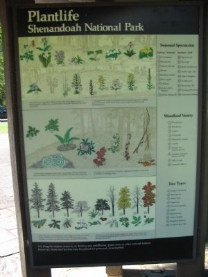 Park Plantlife Information image. Click for full size.