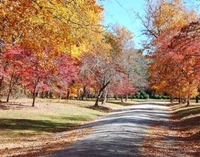 Tree Lined Drive to Rose Hill image. Click for full size.