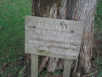Red Cedar Marker image. Click for full size.