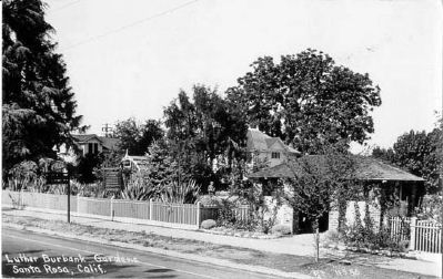 Vintage Postcard - Luther Burbank Gardens, Santa Rosa image. Click for full size.