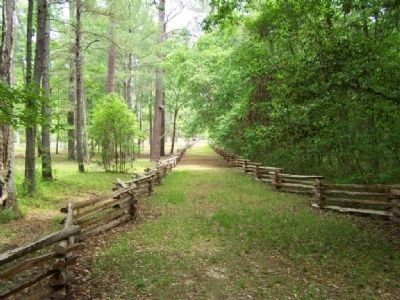 Rivers Bridge State Historic Site , the road up from the Salkewatchie River image. Click for full size.