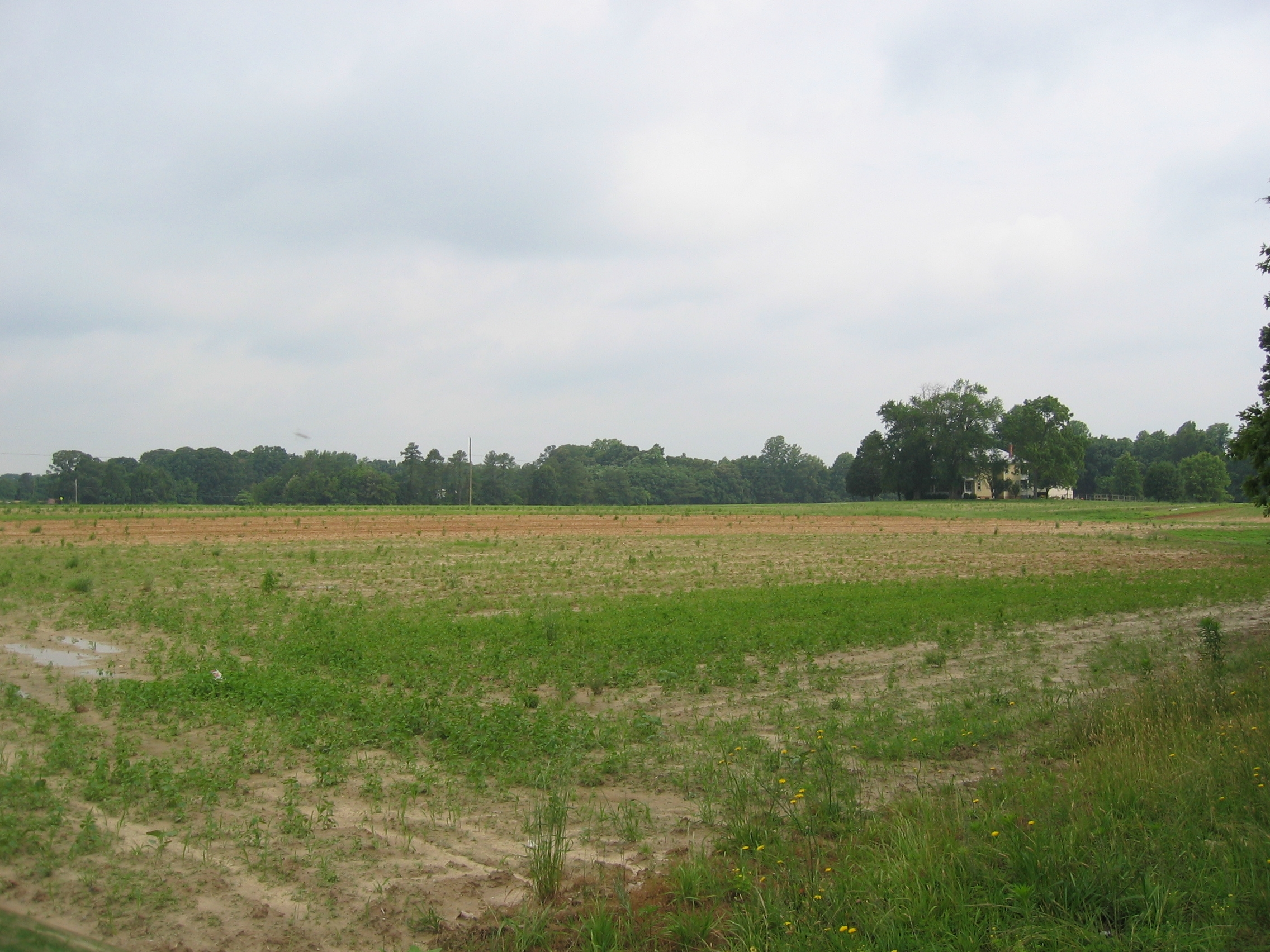 Facing west towards the Confederate position near Hundley