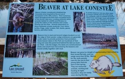Beaver at Lake Conestee Marker image. Click for full size.