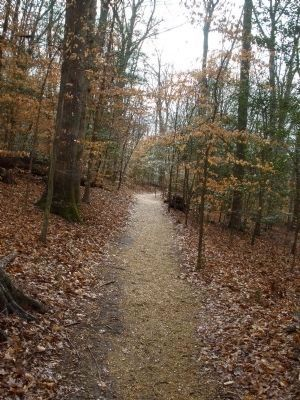Gaines' Mill Battlefield Loop Trail along Boatswain's Creek below the Watt House image. Click for full size.