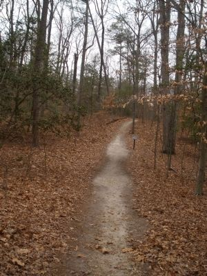 Extended loop trail east of Anderson-Wright Drive. image. Click for full size.