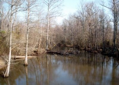 Chickahominy River, New Kent County, Va. image. Click for full size.