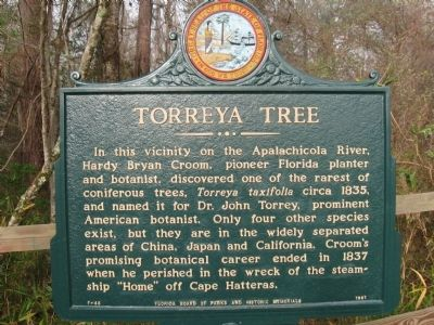 Torreya Tree Marker image. Click for full size.