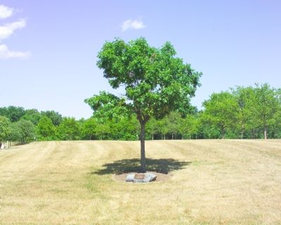 The White Oak image. Click for full size.