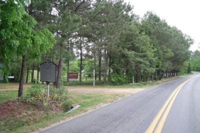 Piney Grove on The Glebe Lane (facing east). image. Click for full size.