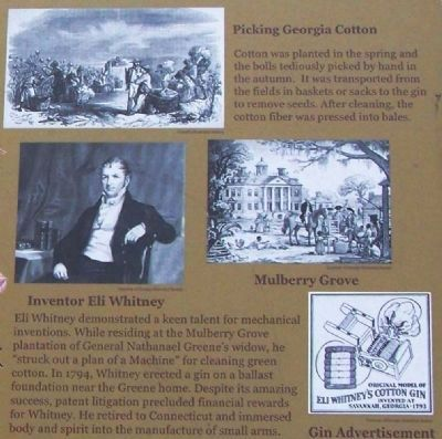 Picking Cotton, Inventor Eli Whitney , Mulberry Grove , Gin Advertisement image. Click for full size.