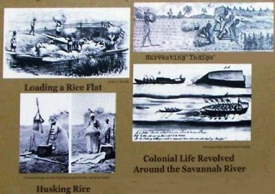 Harvesting Rice, Husking Rice, Harvesting Indigo ,Colonial Life Resolved Around the Savannah River image. Click for full size.