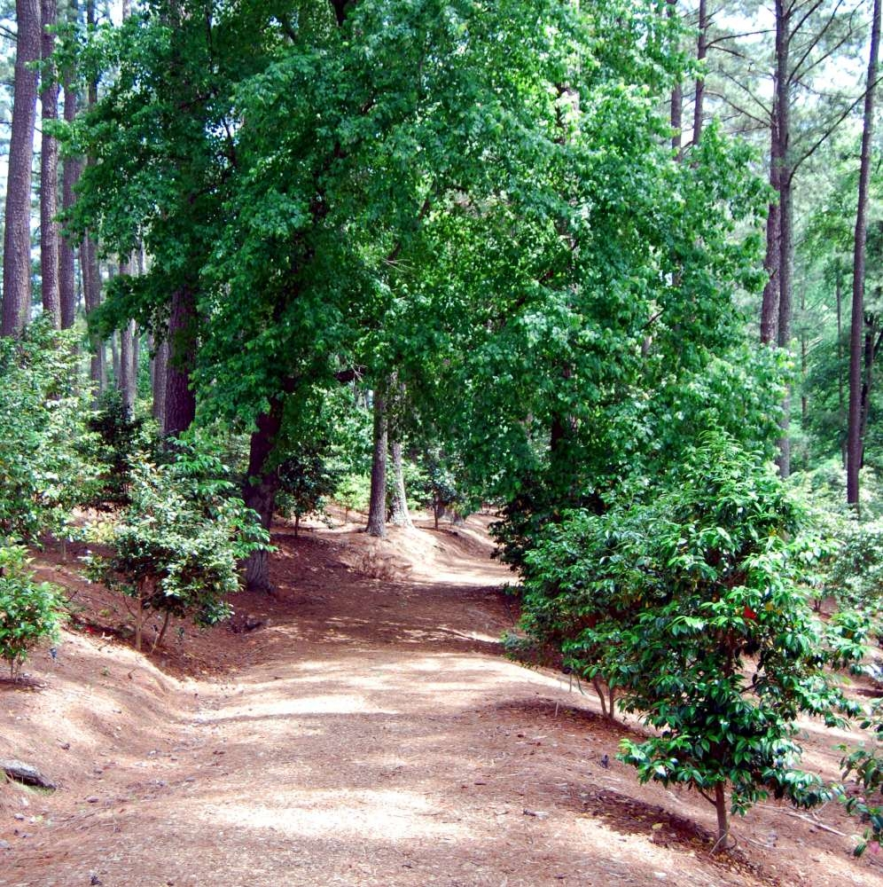 Trail Leading from the Baxter Marker into the Camellia Garden