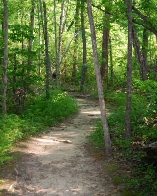 Paris Mountain State Park -<br>Sulphur Springs Trail image. Click for full size.