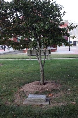 Dogwood Tree & A Memorial. . . image. Click for full size.