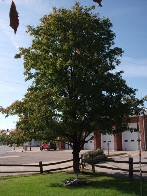 """Tammy Letner""  Memorial Tree image. Click for full size."