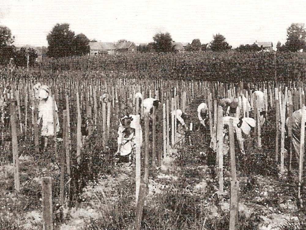 The Abbeville Cotton Mill Tomato Club