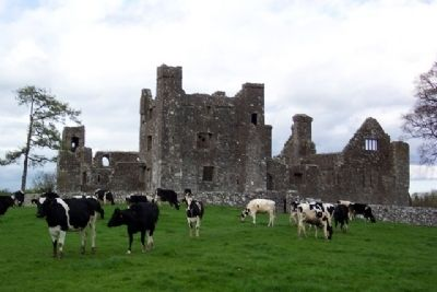 Bective Abbey / Mainistir Bheigtí image. Click for full size.