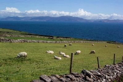 Sheep Grazing Next to Dunbeg Promontory Fort image. Click for full size.