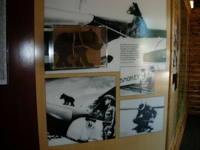 Museum display of Smokey with the Ranger who found him. image. Click for full size.