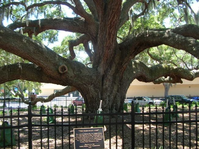 The Baranoff Oak and Marker image. Click for full size.