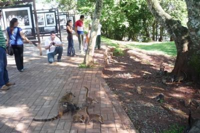 Tourists playing with a family of wild quati at exibit center near Santos-Dumont Memorial image. Click for full size.