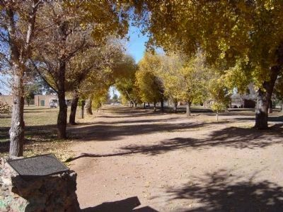 Cottonwood Lane at Fort Lowell image. Click for full size.