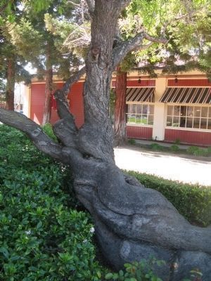 An Interesting Trunk Formation image. Click for full size.