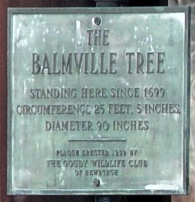 The Balmville Tree Marker image. Click for full size.