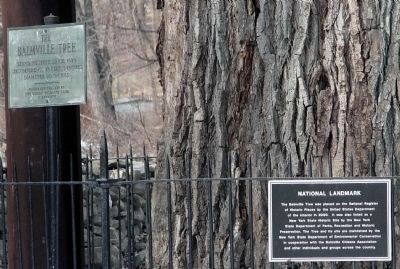 The Balmville Tree Marker Along with National Landmark Sign. image. Click for full size.