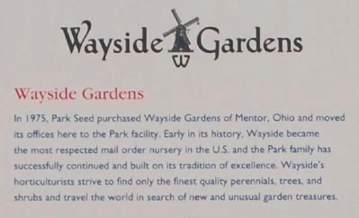 Park's -<br>Wayside Gardens image. Click for full size.