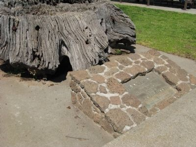Hooker Oak Stump and Plaque image. Click for full size.