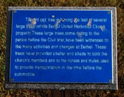 The Old Oak Tree Marker image. Click for full size.