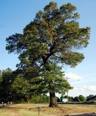 The Old Oak Tree and Marker image. Click for full size.