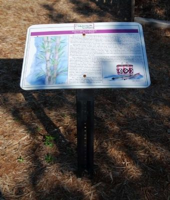 Historic River Cane Marker image. Click for full size.