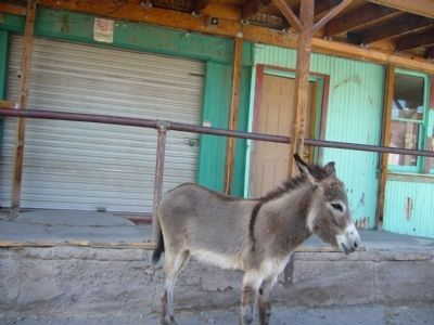 Oatman Arizona and its Burros image. Click for full size.