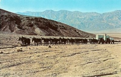 Vintage Postcard - Typical Twenty Mule Team Outfit image. Click for full size.