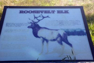 Roosevelt Elk image. Click for full size.