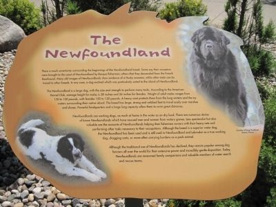 The Newfoundland image. Click for full size.