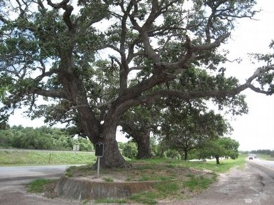 The Urrea Oaks image. Click for full size.