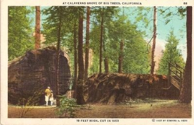 The Discovery Stump and Log - 19 Feet High, Cut in 1853 image. Click for full size.
